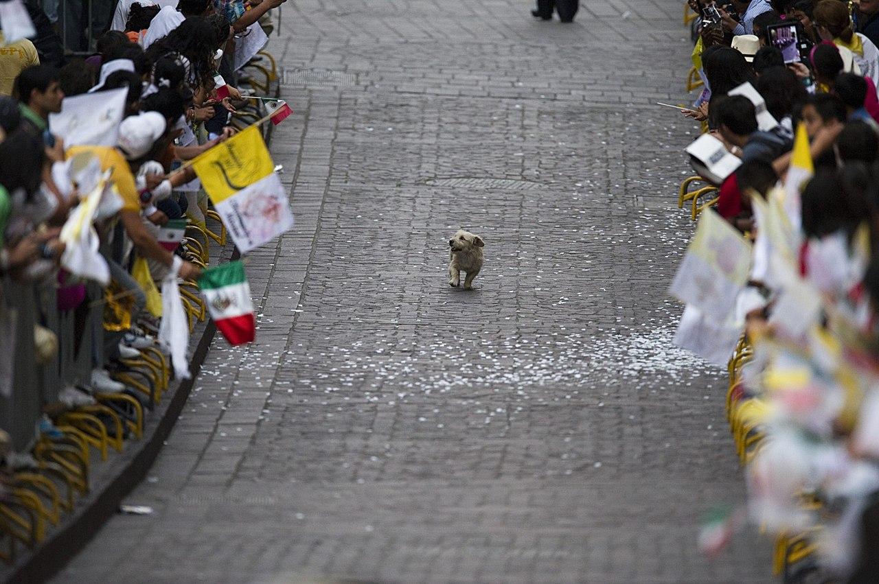 parade_dog