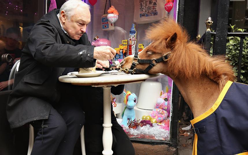 Pony-Snack