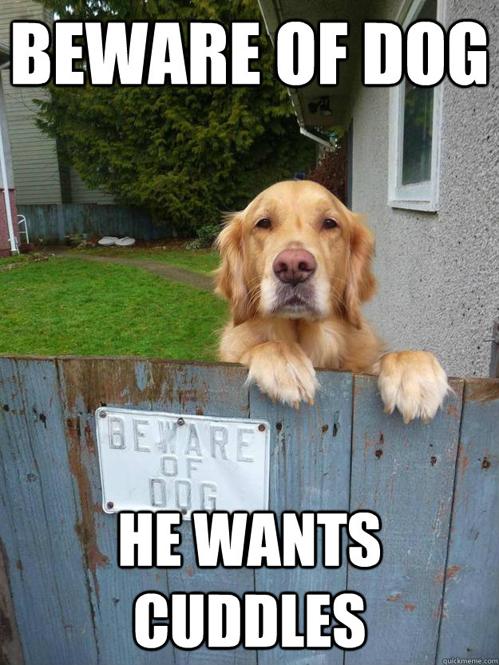 beware-of-dog-he-wants-cuddles