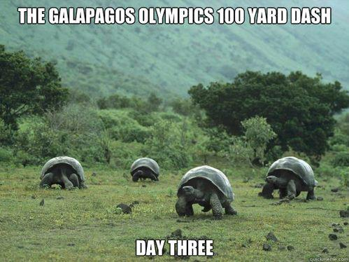 the-galapagos-olympics-100-yard-dash-day-three