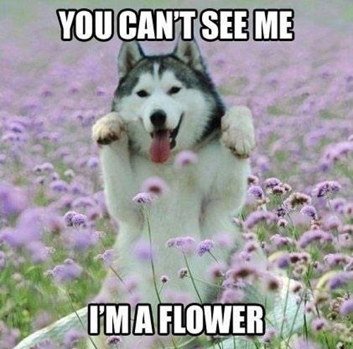 Im-a-flower