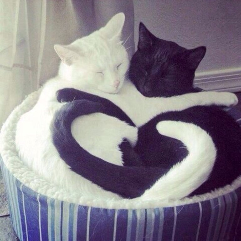heart-cats (Medium)